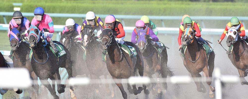 競馬のレース